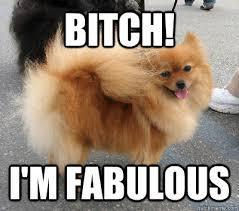 Bitch Im Fabulous Meme - bitch i m fabulous dog 1 quickmeme