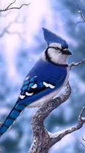 25 blue jay ideas blue jay bird pretty birds