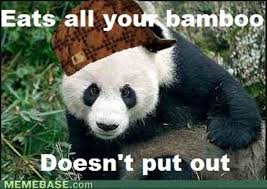 Funny Panda Memes - funniest stupid panda memes photo wishmeme