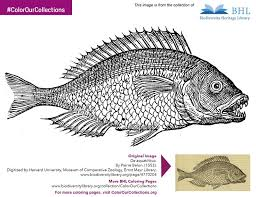 43 bhl coloring pages images coloring