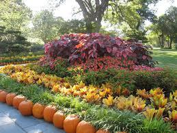 fall pumpkin wallpaper hd beautiful fall flowers wallpaper wallpapersafari