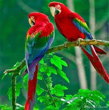 Best Painting Best Paint Parrot To Buy Buy New Paint Parrot
