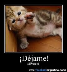 imagenes chistosas y tiernas imágenes originales con perros y gatos para descargar gratis chistosas