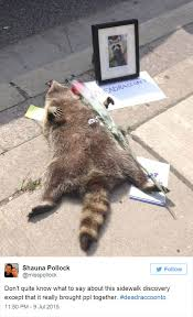 Dead Squirrel Meme - people in toronto made memorial for dead raccoon after city forgot