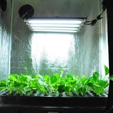 t5 fluorescent grow lights review t5 grow lights vs t8 grow lights which is ideal for a grower
