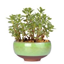 plante bureau wituse mini flowerpot glace fissure glaçure céramique planter