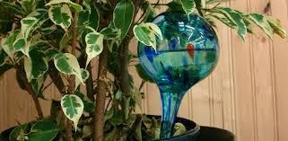 do watering globes like aqua globes really work today u0027s homeowner