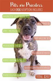 adopt a belgian sheepdog sapa u2013 san antonio pets alive adopt a dog