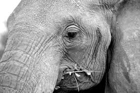 is there an elephant in the room janet roper