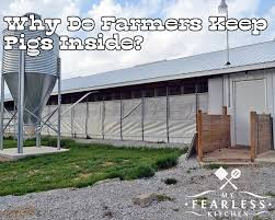 How To Build A Pig Barn Why Do Farmers Keep Pigs Inside My Fearless Kitchen