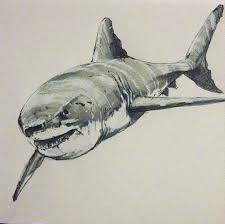 great white shark tattoo drawings pictures to pin on pinterest