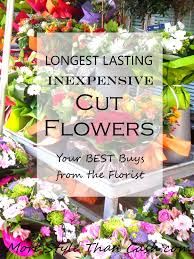 cut flowers lasting inexpensive cut flowers