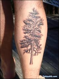 palm tree for leg in 2017 photo pictures images and
