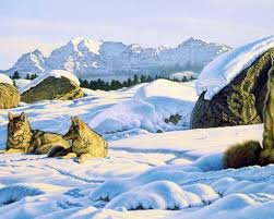 Garden Of Rocks by Images Of Winter Garden Of Rocks Wallpaper Sc