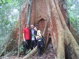 the jungle 1000 year iron tree photo