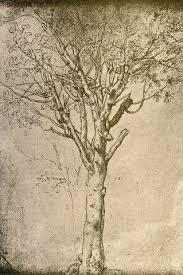 Leonardo Da Vinci Drapery 189 Best Da Vince Images On Pinterest Drawings Sketches And A Tree