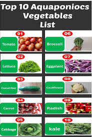 Hydroponics Vegetable Gardening by Best 25 Hydroponics Ideas Only On Pinterest Hydroponic