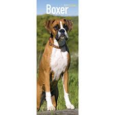 boxer dog 2016 calendar 2018 calendars buy from the dogs trust charity gift shop