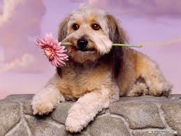 cute dog wallpapers april 2012 dogs wallpapers backgrounds
