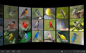 gallery wall 3d android apps on google play