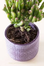 Succulents That Don T Need Light How To Plant A Succulent Succulents And Sunshine