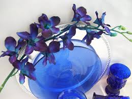 blue orchid flower 4 stems blue violet ca dendrobium orchids galaxy singapore