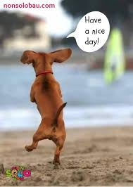 Have A Nice Day Meme - 9 best meme images on pinterest meme memes humor and dachshund dog