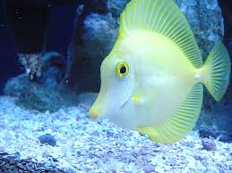 meu fish wallpapers 43 beautiful fish wallpapers