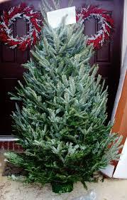 real christmas tree get to your christmas tree tips for real christmas tree