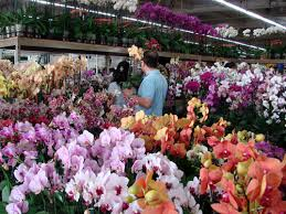 wholesale flowers near me home
