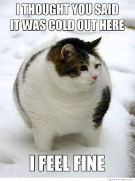 Cold Meme - i thought you said it was cold out here weknowmemes