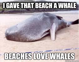 Whale Meme - i gave that beach a whale beaches love whales beached whale