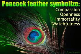 what does a peacock feather symbolize in faiths across the
