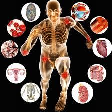 Human Anatomy Flashcards Anatomy Prefix Flashcards Mitchell U0027s Cosmic Adventure