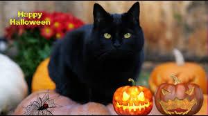 free screensaver for halloween halloweenblackcat youtube