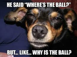 High Dog Meme - really high dog meme wonders the big questions about the ball