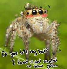 Cute Spider Meme - prador google suche the wylde yonder pinterest