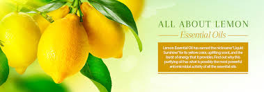 scented indoor l oil lemon oil uses benefits of refreshing invigorating essential oil
