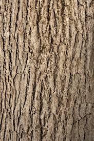 free image of tree bark background