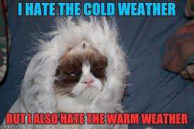 Grumpy Cat Meme Generator - grumpy cat no meme generator the best cat 2017