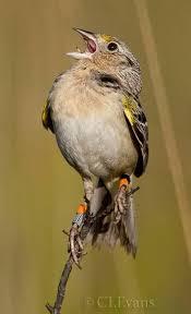 Florida Backyard Birds - 272 best puerto rico birds images on pinterest puerto ricans