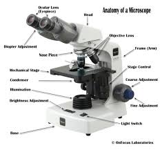 compound light microscope uses parts of a compound microscope with diagram and functions