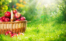 beautiful apple fruits nature hd background images