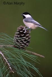 bird chickadee ornament handmade sculpted easter decoration