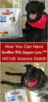 best 25 pet nutrition ideas on pinterest puppy care food for