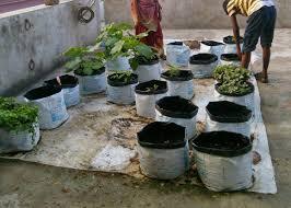 my vegetable garden home rooftop vegetable garden at present