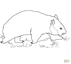 wombat bear coloring page free printable coloring pages