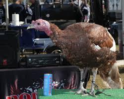 dallas cowboys thanksgiving game 2013 toronto baseball prospectus