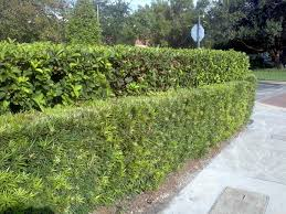fascinating privacy fence trees shrubs bushes gallery best idea