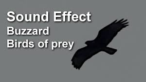 scary sound birds of prey sound effect youtube